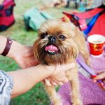 How to Create a Pet's Patio, or Outdoor Space